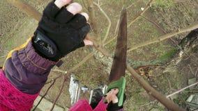 Подрезая зима деревьев акции видеоматериалы