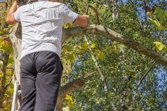 Подрезая мертвые ветви дерева Стоковые Фото
