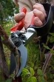 Подрезая ножницы Стоковые Фотографии RF