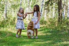 Подруга 2 девушек идя в древесины с ее любимым шпицем любимчика Стоковое Изображение