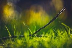 Подсвеченная упаденная ветвь дерева лежа на зеленой траве Стоковое фото RF