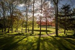 Подсвеченные деревья Стоковое фото RF