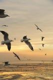 Подсвеченные птицы летая в вечер Стоковое Изображение RF