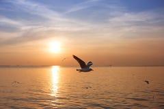 Подсвеченные птицы летая в заход солнца Стоковые Фотографии RF