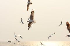 Подсвеченные птицы летая на заход солнца Стоковые Изображения