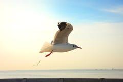 Подсвеченные птицы летая на заход солнца Стоковые Изображения RF