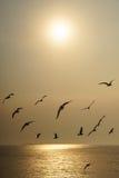 Подсвеченные птицы скользя на заходе солнца Стоковое Изображение RF