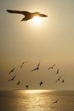 Подсвеченные птицы скользя на заходе солнца Стоковые Фотографии RF