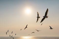 Подсвеченные птицы скользя на заходе солнца Стоковая Фотография