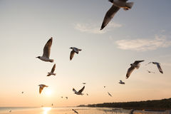 Подсвеченные птицы скользя на заходе солнца Стоковая Фотография RF