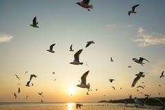 Подсвеченные птицы скользя на заходе солнца Стоковые Изображения RF