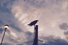 Подсвеченный ворон на высоком поляке смотря вперед Стоковая Фотография RF