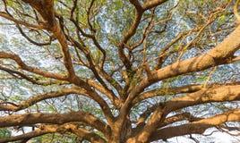 Под старым большим деревом Стоковые Изображения