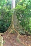 подстенок корня дерева и тропический пол леса стоковая фотография rf