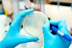 Подсчитывать бактериофаги Стоковая Фотография
