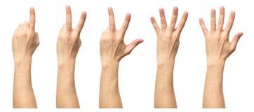 5 подсчитывая мужских рук изолированных на белизне Стоковые Изображения
