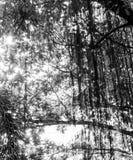 Под тенью дерева Стоковые Фото
