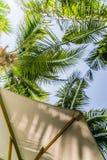 Под тенью с деревьями cocunut Стоковые Изображения