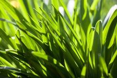 под травой Стоковые Фото