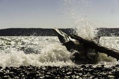полузатопленный Стоковая Фотография RF