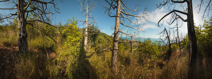 Полуостров Abrau, запас Utrish Стоковое Изображение RF