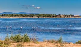 Полуостров Giens, лоток соли, фламинго-Hyeres, Франция стоковые фото