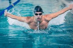 Подходящее заплывание человека Стоковое Фото