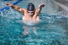 Подходящее заплывание человека Стоковое Изображение RF