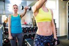 2 подходящих женщины в спортзале разрабатывая с весами Стоковые Изображения RF