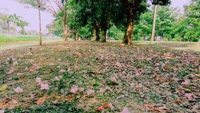 Пол цветка Стоковое Фото