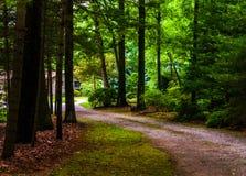 Подъездная дорога грязи к дому в сосновом лесе. стоковое фото rf