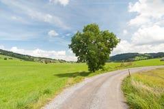 Подъездная дорога с деревом Стоковое Изображение