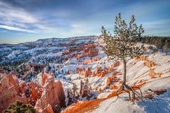 Подъем зимы Bryce Стоковые Фотографии RF