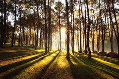 Подъем Солнця на угрызение-ung, сосновый лес в Таиланде Популярное место для установки шатер, располагаться лагерем и перемещение Стоковое Изображение