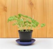польза завода листьев дома детали предпосылки Стоковое Изображение