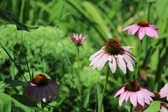 Польностью зацветая цветки Стоковое Фото