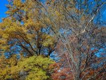 польностью красочные листья падения на дереве стоковое фото