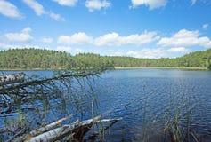 Польша Национальный парк Bory Tucholskie в лете Горизонтальный взгляд o Стоковая Фотография