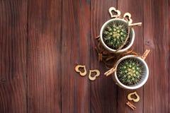 Полюбите кактусы сердец с деревянной и естественной веревочкой Стоковые Фотографии RF
