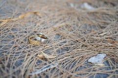 полюбите кольцо Стоковые Изображения RF
