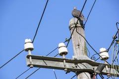 Поляк и кабели распределительной сети электричества против сини Стоковое фото RF