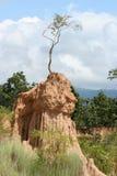 Поляк чудесное Nan почвы, Таиланд Стоковые Изображения RF