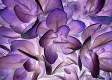 Поляризовыванные цветки Стоковое Фото