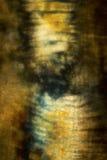Поляризовыванный, абстрактный микрорисунок мышцы от earthworm Стоковая Фотография