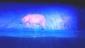Полярный медведь на аквариуме Стоковая Фотография