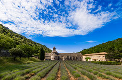Поля лаванды, Провансаль, Франция Стоковое Фото
