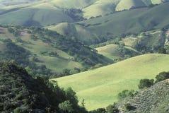 Поля весны в долине Carmel, Калифорнии Стоковые Изображения RF