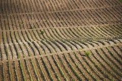 Поля виноградины выше Стоковые Фотографии RF