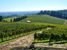 Поля виноградины Стоковые Изображения RF