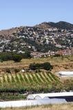 Поля виноградников на окраинах Барселоны Стоковые Фотографии RF